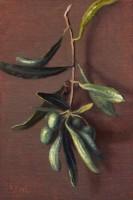 http://www.abbeyryan.com/files/gimgs/th-56_abbeyryan-2017-greece-6x4-olive-branch-patmos.jpg
