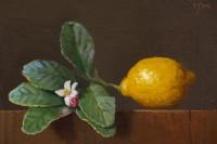 http://www.abbeyryan.com/files/gimgs/th-56_abbeyryan-2017-lemon-with-leaves-flower-bud4x6.jpg