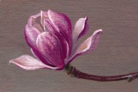 http://www.abbeyryan.com/files/gimgs/th-56_abbeyryan-2018-magnolia-flower-no-1.jpg